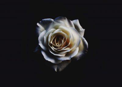 fal_Flower798