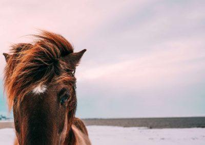 fal_Horse682fcc